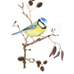 Blue tit original watercolour