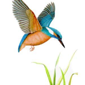 Kingfisher original watercolour